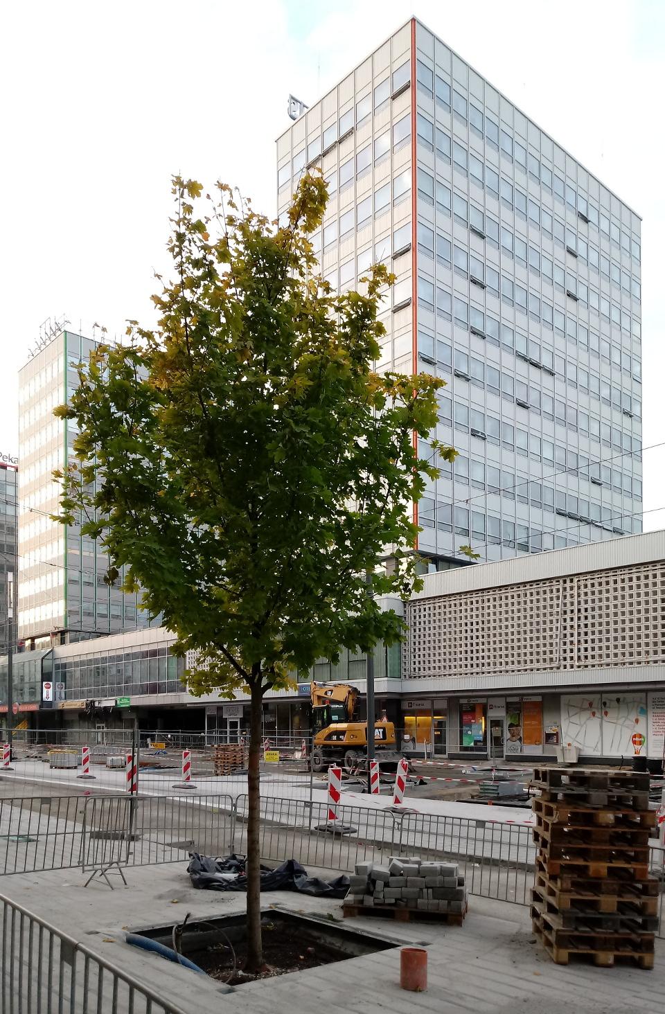 Poznań Święty Marcin fotorelacja zdjęcia drzewa Projekt Centrum 12