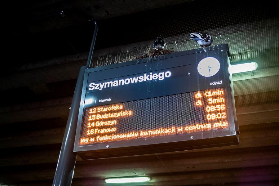 Poznań Poznański Szybki Tramwaj PST gołębie