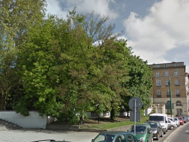 Poznań drzewa Park Wilsona przed wycinką