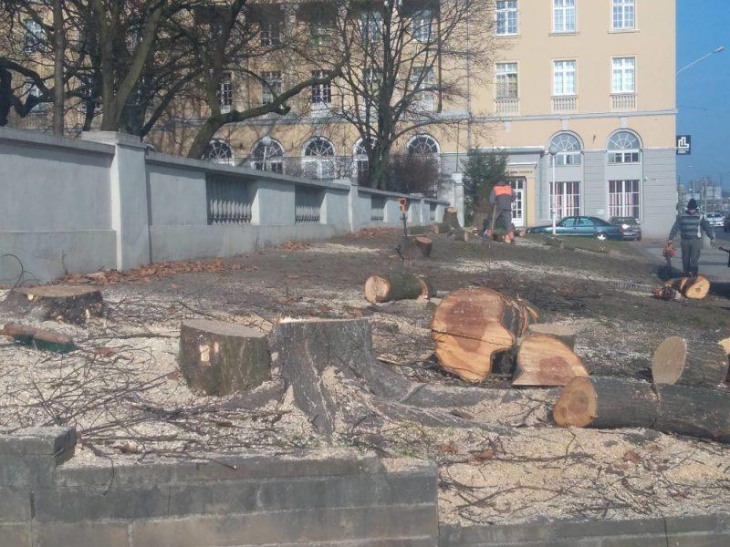 Poznań wycięte drzewa przy Parku Wilsona ul. Głogowska