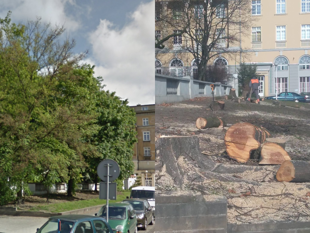 Wycięto drzewa przy Parku Wilsona, aby… urządzić skwer