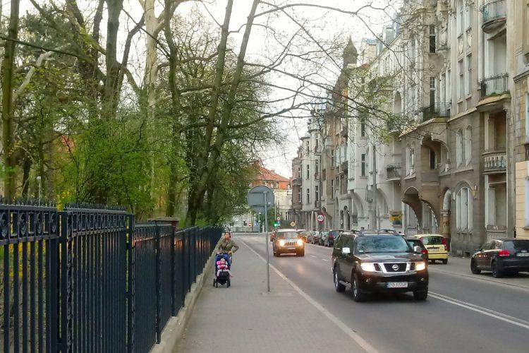 Matejki Łazarz Park Wilsona drzewa wycinka Palmiarnia Poznańska