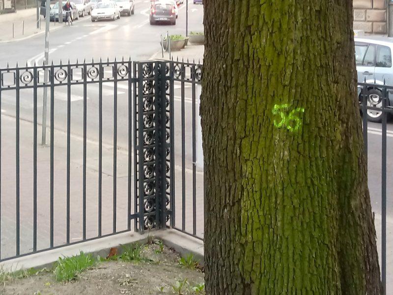Poznań Palmiarnia Poznańska Park Wilsona Matejki drzewa