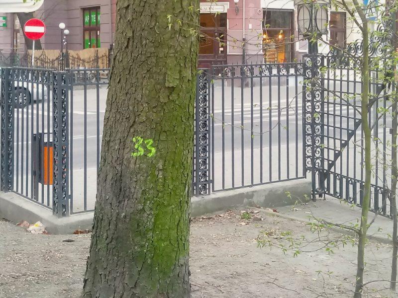 Poznań Park Wilsona Matejki Łazarz wycinka