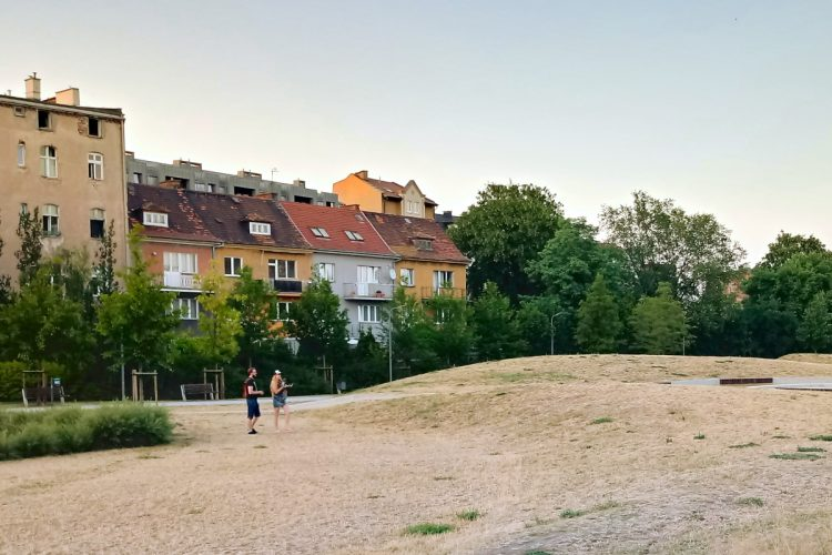 Żółta trawa - Park Stare Koryto Warty i efekty suszy