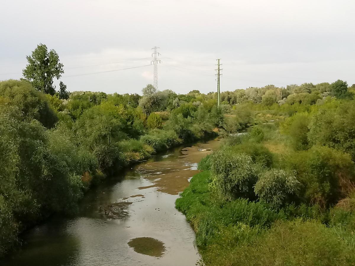 Prawie wyschnięta Cybina w dolnym biegu - susza w Poznaniu