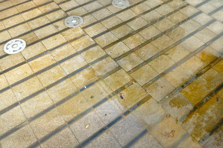 Święty MArcin: zakwit wody w kałużach, Poznań