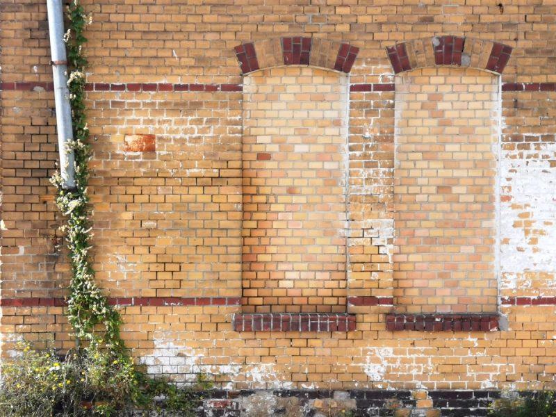 Choć rynna ziemi nie sięga, to roślinom to nie przeszkadza w oplataniu jej - detal kompleksu dawnej rzeźni miejskiej