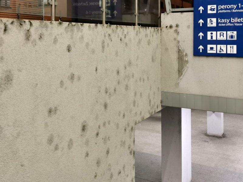 Zagrzybione ściany w rejonie zejść do tunelu na poziomie -1. Poznań Główny