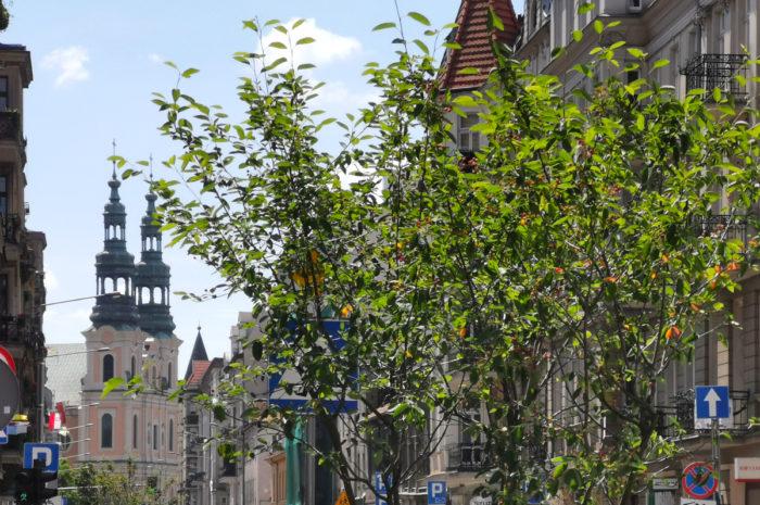Garbary: powrót zieleni po kilkudziesięciu latach. Buspas od 21 czerwca [ZDJĘCIA]