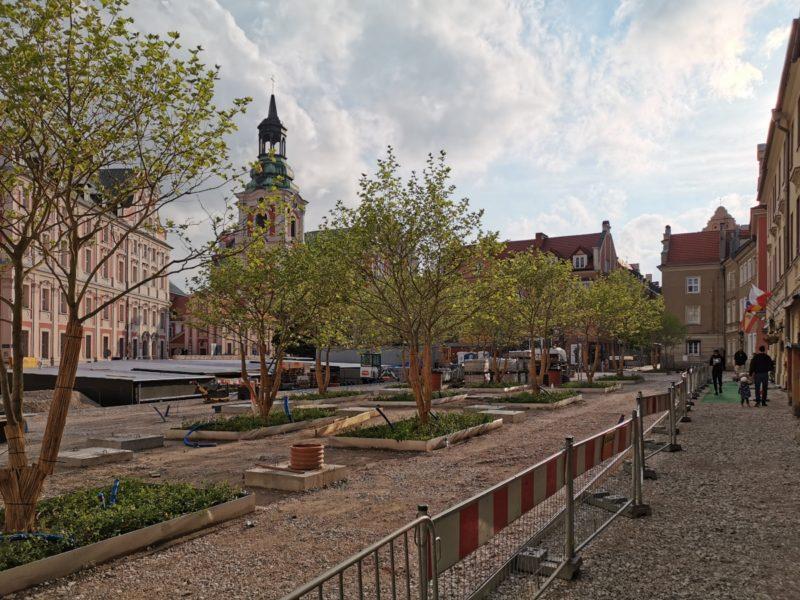Czternaście platanów posadzono w północnej części placu Kolegiackiego