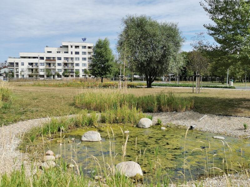 Park Rataje: oczko wodne