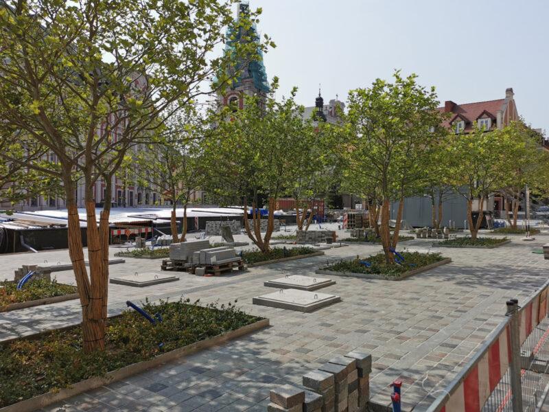 Północna część placu, drzewa i kostka. Betonowe pokryty mają być obudowane ławkami