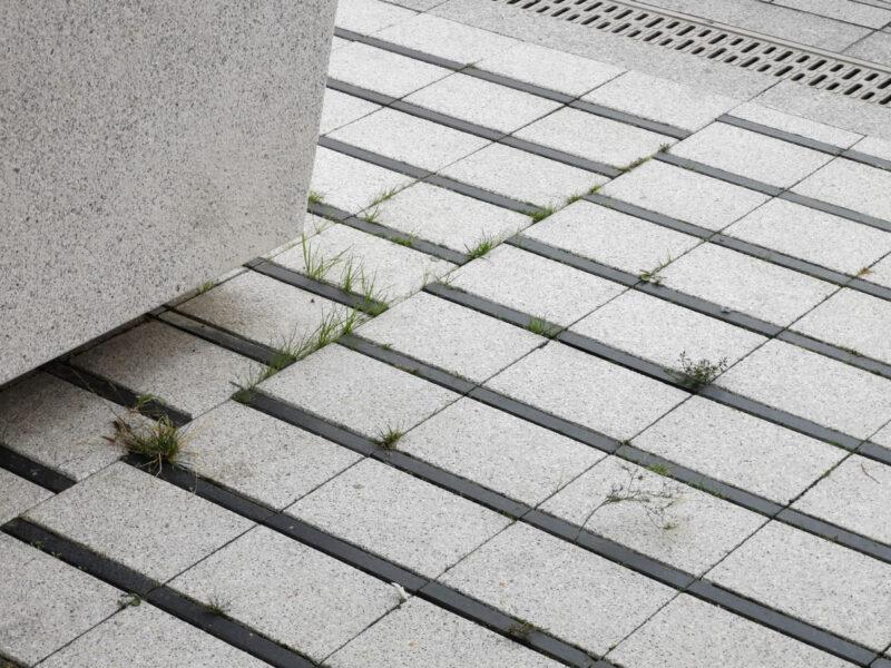 1,5 roku po zakończeniu przebudowy ulicy Święty Marcin: chwasty wyrastają ze szpar między kostkami