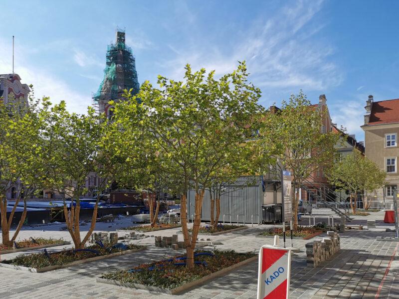 Północna część placu, drzewa i kostka. Tu w porównaniu do września 2020 zmian niewiele