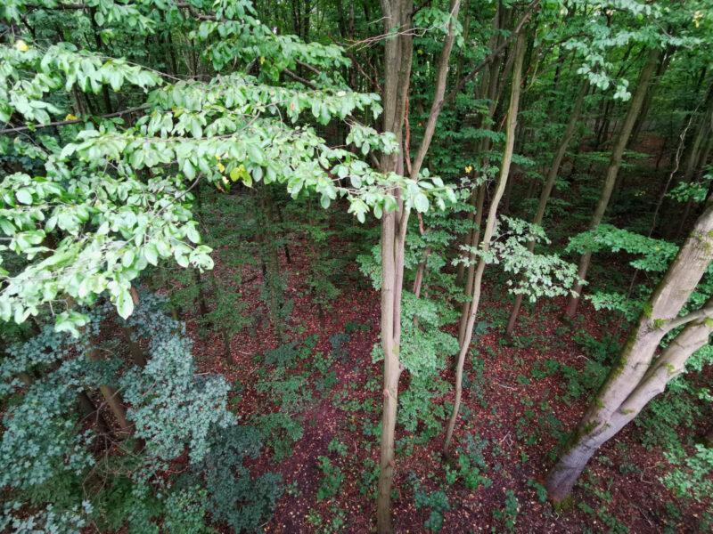 Jesteśmy wysoko nad ziemią - w najwyższym punkcie 13 metrów ponad poziom runa leśnego
