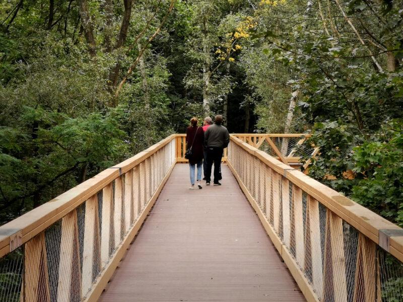 Cała ścieżka w koronach drzew mierzy 250 metrów