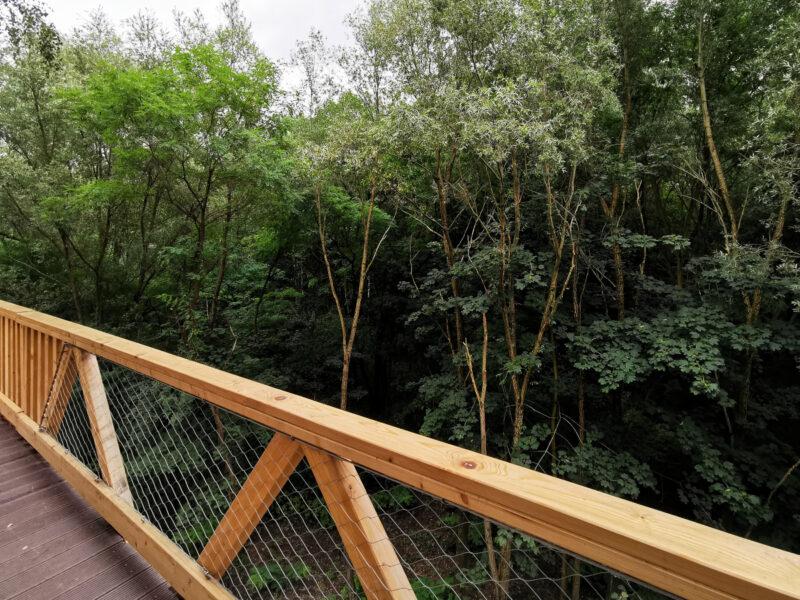 Ścieżka w koronach drzew wznosi się nad doliną Szklarki