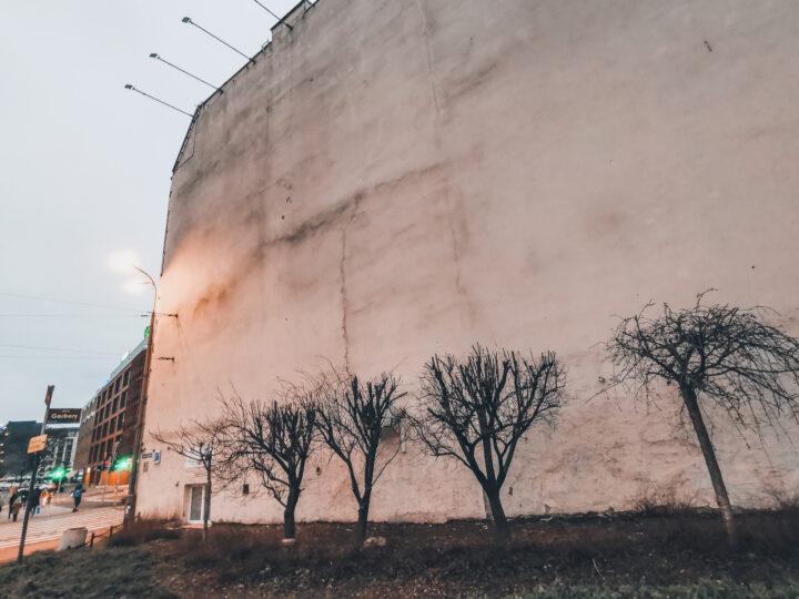Nielegalne przycięcie drzew na ul. Estkowskiego pod nośnikiem reklamowym