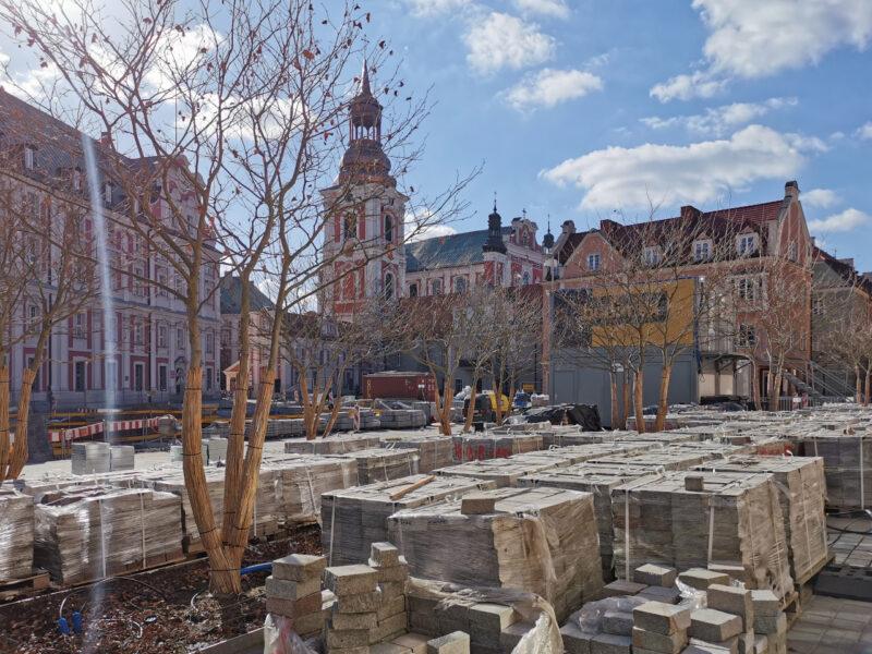 Między platanami zorganizowano magazyn kostki kamiennej